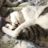 人も猫も大好き♪クルミちゃん サムネイル6