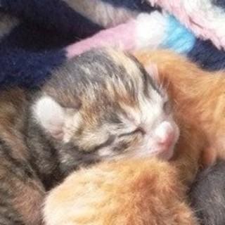 野良猫母さんが集積場で産んだ5兄妹