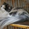 リタイヤ猫の♀二匹の里親探してます