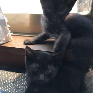 活発な子猫姉妹です