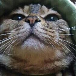 猫ちゃんの里親譲渡会IN高井戸・杉並 サムネイル1