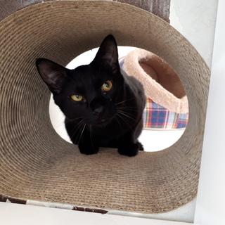 スマートな黒猫こころくん