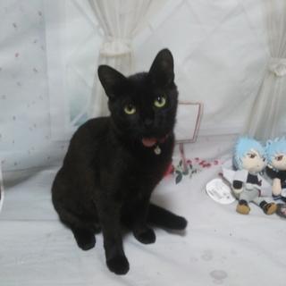 黒猫ソラちゃん