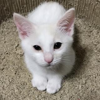 捨てられていた子猫の里親募集中‼︎