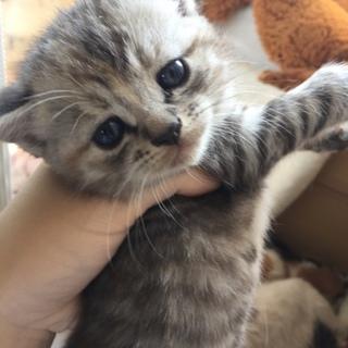 生後1ヶ月半の子猫。