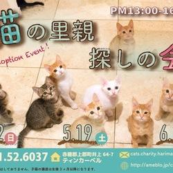 「猫の里親探しの会」5月19日(土)