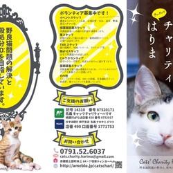 「猫の里親探しの会」5月19日(土) サムネイル2