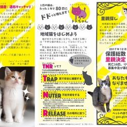 「猫の里親探しの会」5月19日(土) サムネイル3