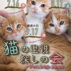 「猫の里親探しの会」7月16日(月)