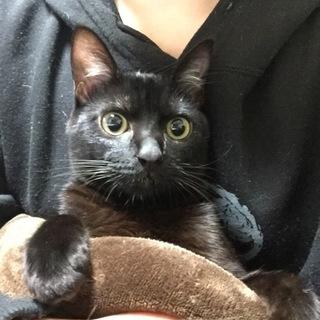 3歳の可愛い黒猫です。