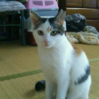 可愛い〰三毛猫ちゃん。