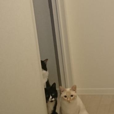 仕事から帰り玄関を開けて、ただいま〜!おかえり〜!の幸せ。