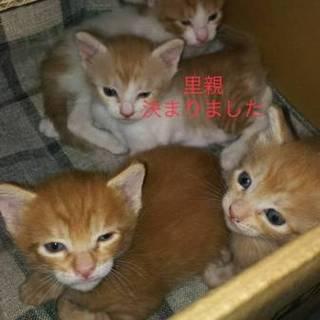 子猫4匹の里親さん募集