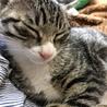 子猫の粗相