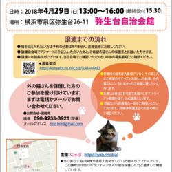 横浜市泉区でねこの譲渡会 第5回 4月29日(日)