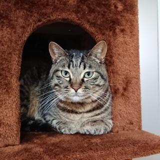 イケメン猫。人懐っこい猫です