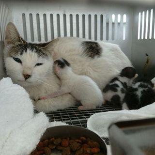 緊急!4/22子猫出産しました!収容期限4/25朝