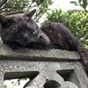 The 野良猫!的なブロック塀の上のこげ茶さん。この下で草取りをしている私を監督中。