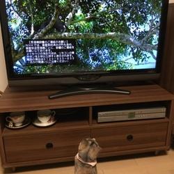 「岩合光昭の世界ネコ歩き」を見てます。