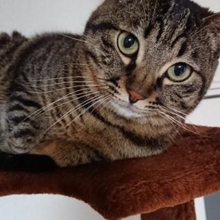 イケメン猫。人懐っこくて甘えん坊な猫ちゃんです
