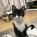 白黒仔猫 おっとり癒し系女の子 アユミ