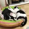 白黒仔猫 おっとり癒し系女の子 アユミ サムネイル2