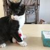 白黒仔猫 おっとり癒し系女の子 アユミ サムネイル3