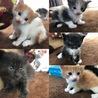 4/23生まれ子猫3匹の里親を探しております