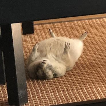 暑いからここで寝よ