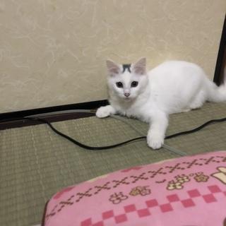 ふわふわもふもふの白猫ちゃん