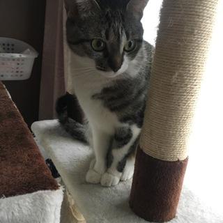 メス猫 1歳〜2歳 小柄です