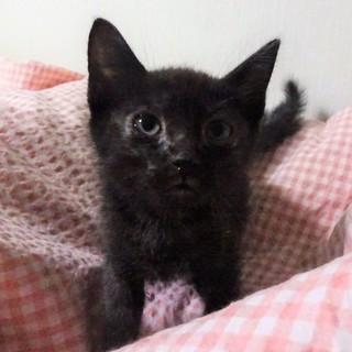 真っ黒じゃない黒猫、青葉くん、2か月半