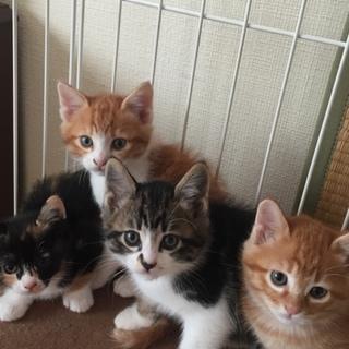 子猫の里親様探しています。