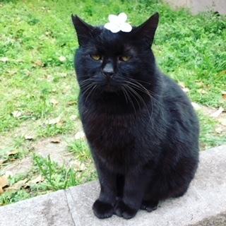 愛嬌のある顔が魅力的な人慣れした黒猫のオス♡
