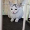 期限間近 ゴロゴロ白猫ちゃん 動画あり