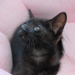 真っ黒じゃない黒猫 なつきちゃん