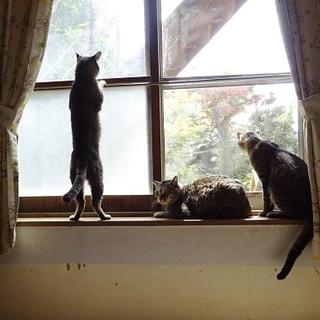 大人猫さんお迎え待ってますトライアル歓迎