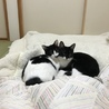 白黒仔猫 おっとり癒し系女の子 アユミ サムネイル4