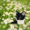 白黒仔猫 おっとり癒し系女の子 アユミ サムネイル5