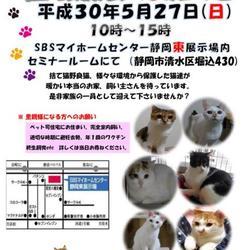 静岡市 チーム にゃんのヒゲ 猫SOS 譲渡会