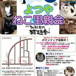 5月12日(土) 地域猫から社会猫へ FIPフリー 四谷猫廼舎 里親会(ボランティア募集中)