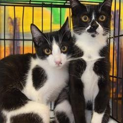 5月26日(土) 地域猫から社会猫へ FIPフリー 四谷猫廼舎 里親会(ボランティア募集中) サムネイル2