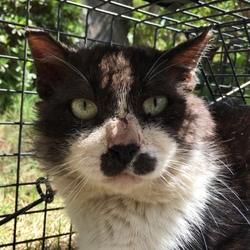 近況、ネコの個性さまざま、「猫返し神社」