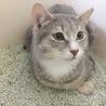 [トライアル中]飼い主入院で置き去りにされた猫達 サムネイル6