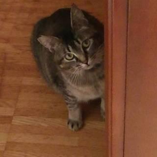 飼い猫初心者でも、安心!留守番も平気な甘えたさん