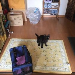 子猫が居ないと無言の圧力