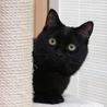 生後10ヶ月くらいの黒猫さん
