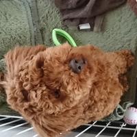 北澤チョコ