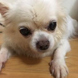 5月4日(祝)にイベントに参加!犬の譲渡会もします!