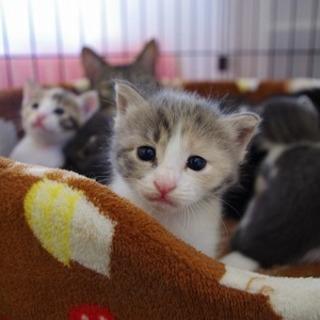 フワフワのパステル三毛の子猫さん